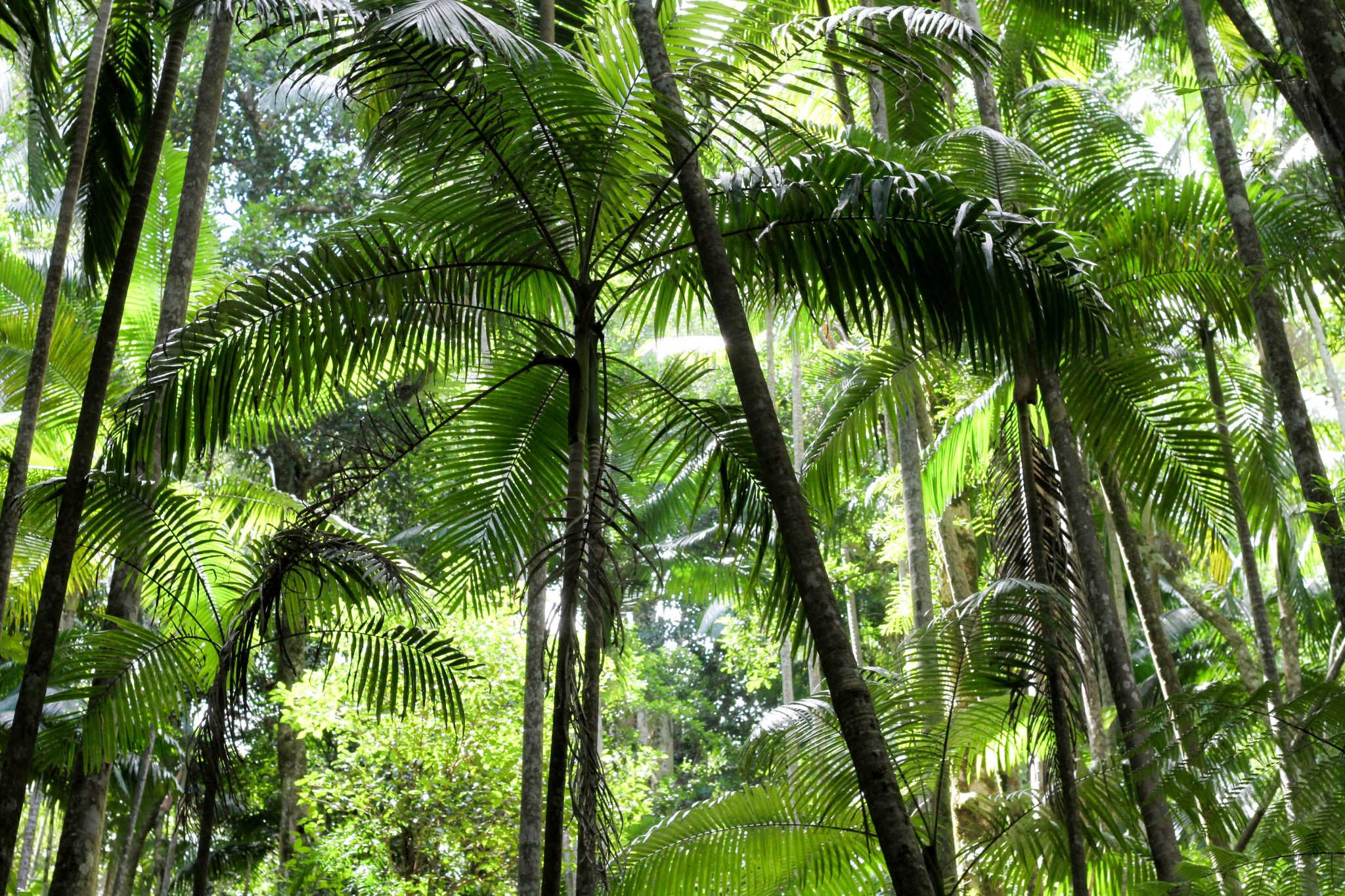Beautiful Rainforest Palms